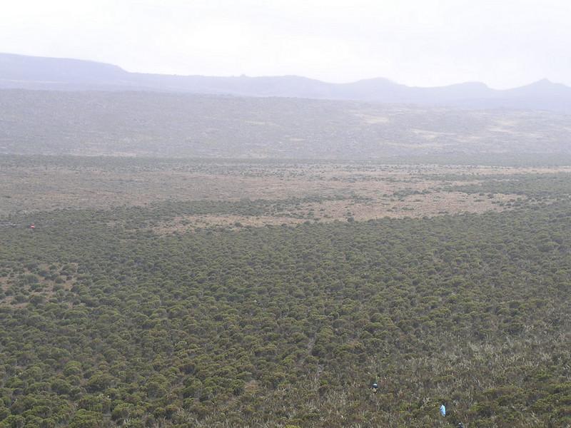 Shira plateau Kilimanjaro (Heath and moorland 2800 - 4000 m)