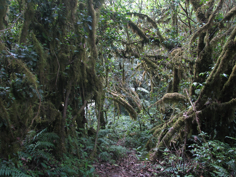Tropical forest (Kilimanjaro)