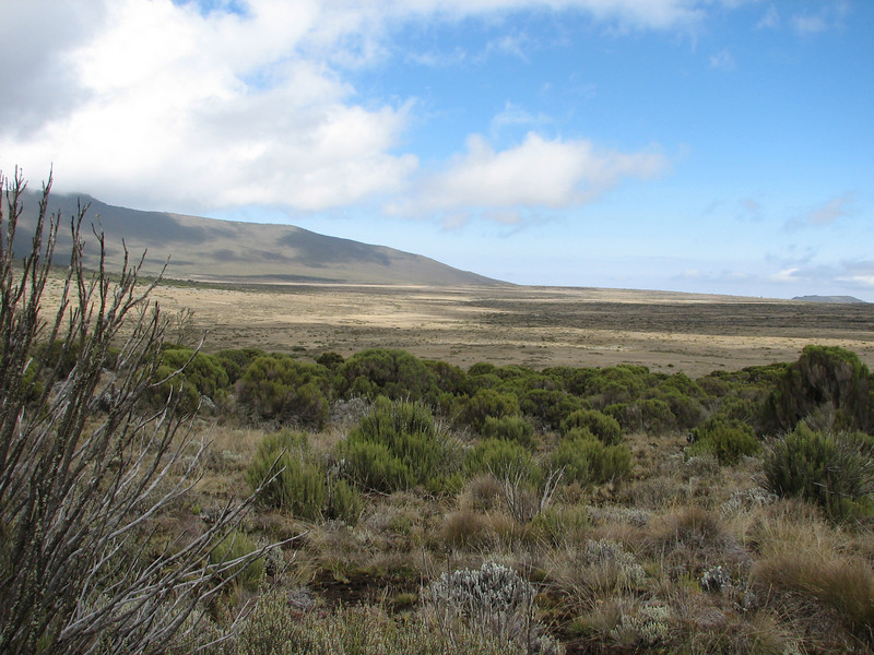 Shira plateau Kilimanjaro (Heath and moorland 2800 - 4000 m)