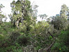 Tropical forest (1800 - 2800m Kilimanjaro)