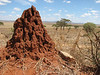 Earth mounds built by Termites
