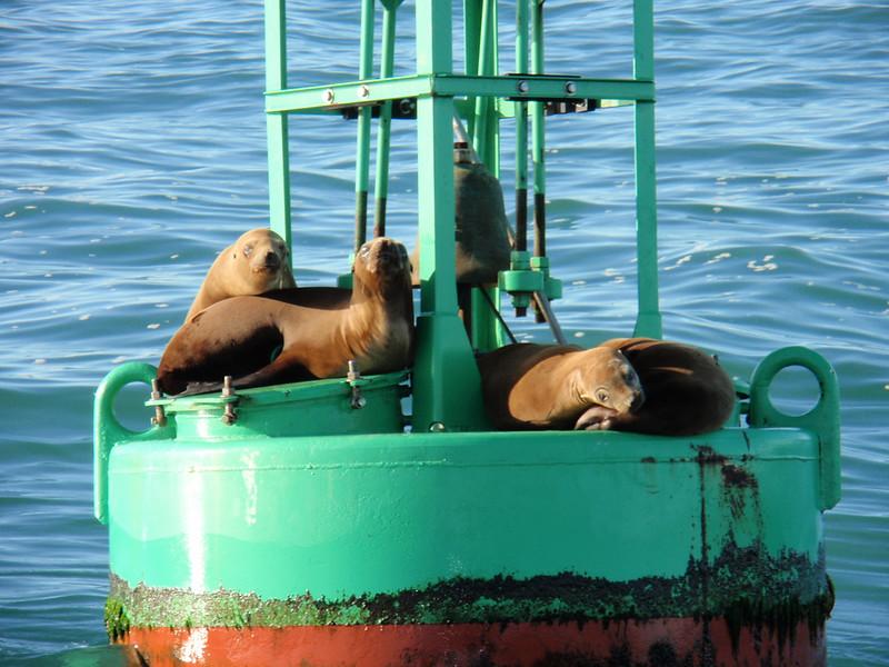 Sealed Buoy