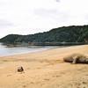 Female Elephant Seal, Pilot's Cove, Ulva Island