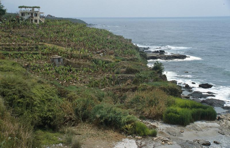 Coastal plantations, Anamur-Antalya, South Turkey