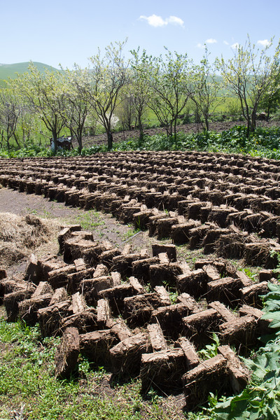manure used as a fuel