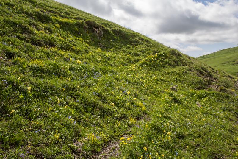 Habitat, meadow
