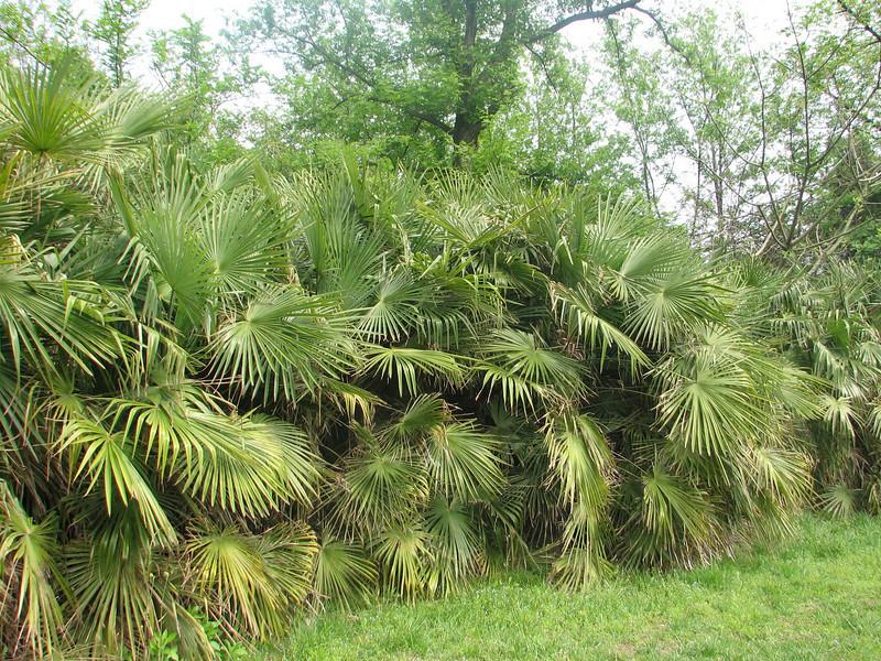 Palm?