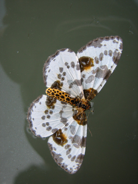 butterfly spec?? Hongcun, (Unesco World Heritage Site)