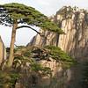 Welcome Tree, Natonal Park Huangshan, Anhui, East China