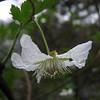 Rubus spec.