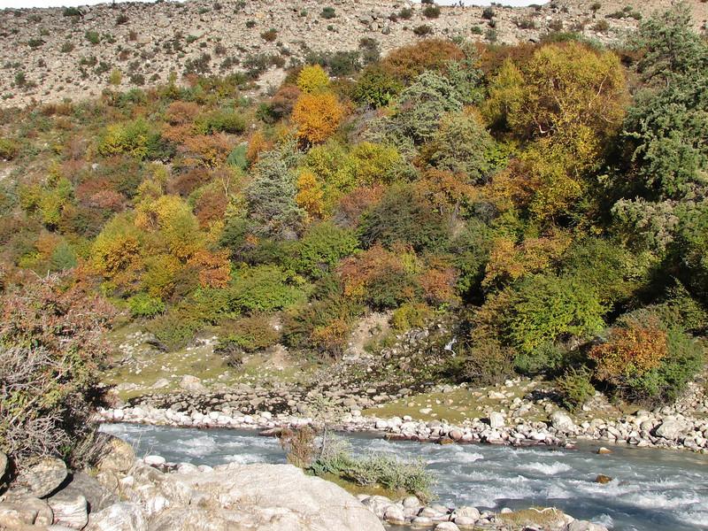 Autumn colours, Kharta river, Kharta Camp 3710m