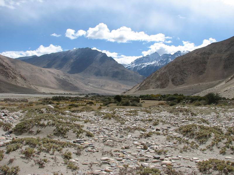 habitat of Androsace and Astragalus spec. (Tibetian high plane) Latse 4050m-Kharta Camp 3710m