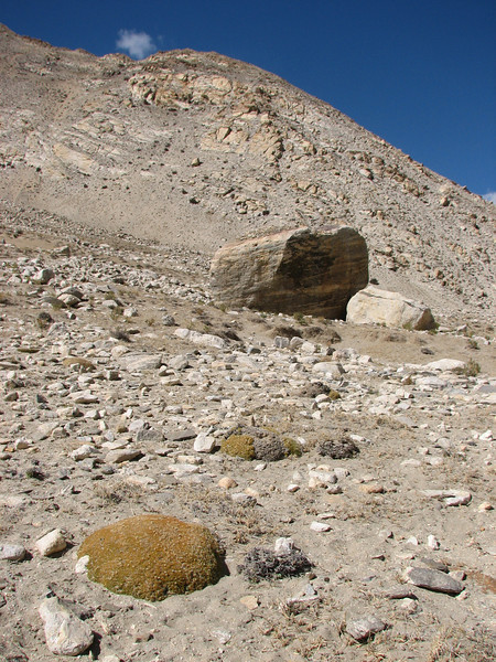Arenaria spec. Rongbuk-Everest Base Camp 5156m