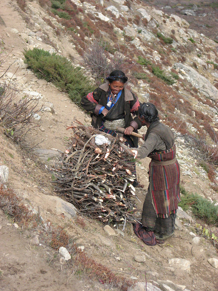 Collecting fire wood, near River Camp 4941m