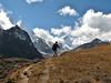 Habitat Gentianaceae, Djaksim Camp 4053m-Bahtang Glacier-Camp 4379m
