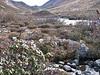 Rhododendrons, Kharta Camp 3710m-Shao La Basic Camp 4662m