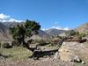 Juniperus ?  Kharta Camp 3710m-Shao La Basic Camp 4662m
