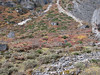 Autumn colours, Shao La Basic Camp 4253m - Shao La 4904m-Djaksim Camp 4053m