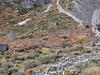Autumn colours, Shao La Basic Camp 4253m - Shao La 4904m-Djaksim Camp 4053m