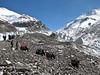 Intermidlate Camp 1 1/2, 5771m-Camp 2 6080m