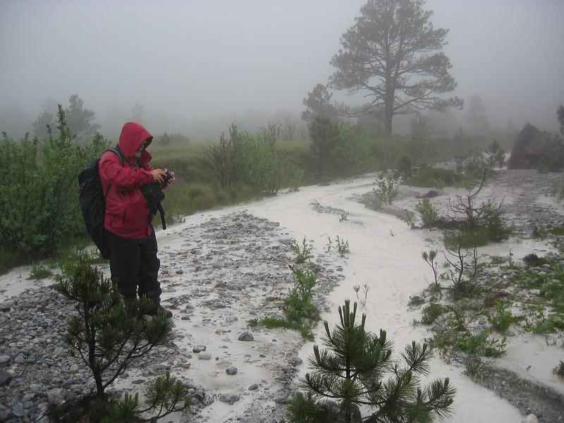 Botanizing in fog (Gang Ho Ba 2880m.Yunnan)
