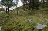habitat of Roscoea cautleyoides (Yulong Xue Shan pas 2860m Yunnan)