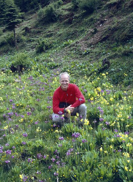 Marijn between Primula sikkimensis and P. secundiflora