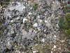 Paraquilegia anemonoides (Bai Ma Shan)