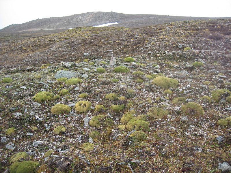 Habitat of Chionocharis hookeri and Arenaria polytrichoides (Bai Ma Shan 4800m.)