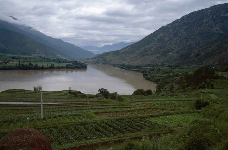rice fields near the Yangtze river
