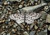 butterfly,