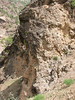 habitat of Dionysia caespitosa12 and Dionysia khuzistanica 13