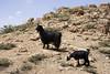 flora enemies, the goats