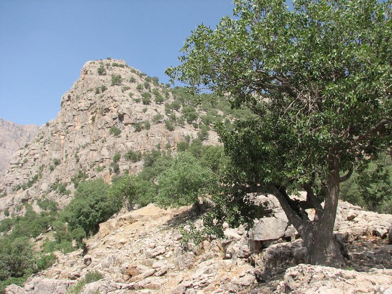 landscape, Bazoft valley
