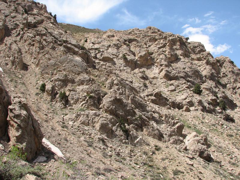 habitat of Dionysia lurorum