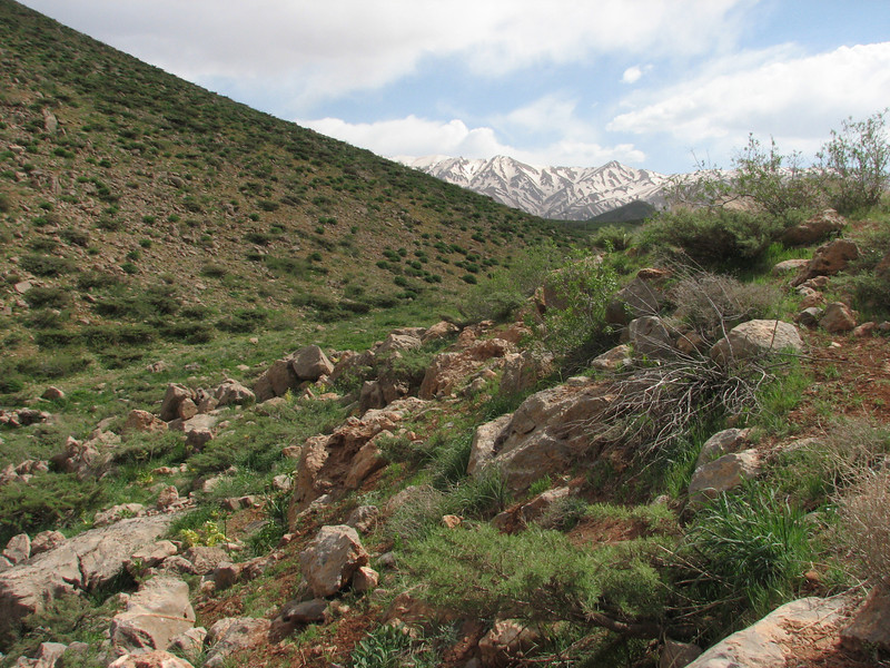 Zagros mountains, habitat with lime stone