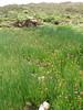 wet/moist habitat of Fritillaria reuteri