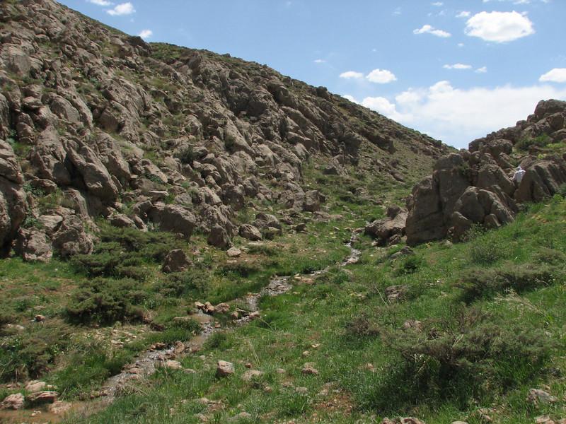 habitat Dionysia haussknechtii