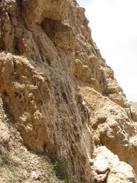 habitat of Dionysia zetterlundii