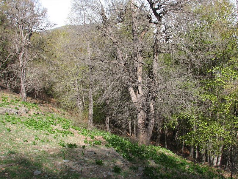 habitat with autumn flowered Colchicum