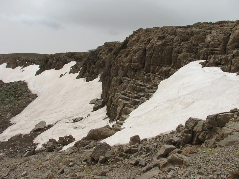 habitat near melting snow