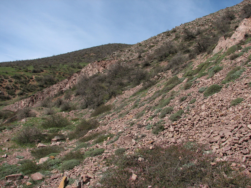 scree with Astragalus, Acantholimon and Amygdalus shrubs