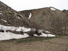 habitat near melting snowfields
