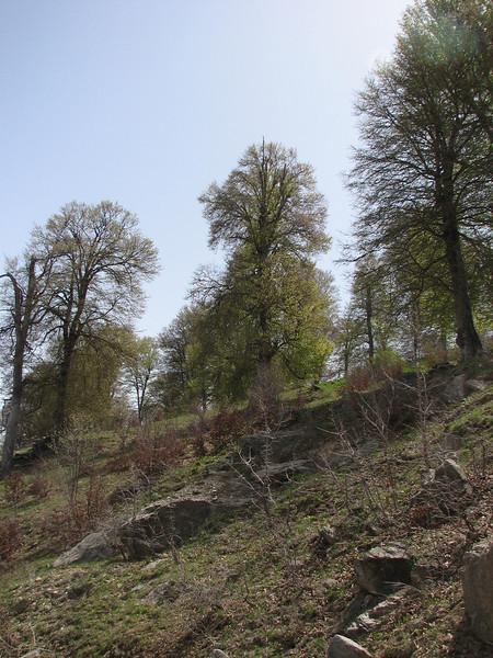 deciduous woods,