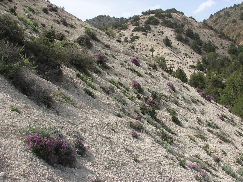 habitat of Onobrychis cornuta