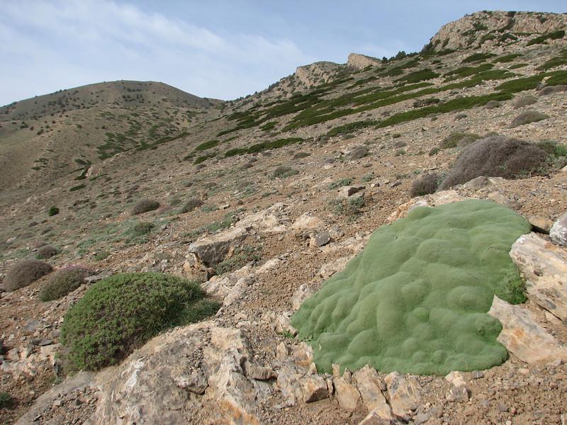 habitat of Gypsophila aretioides and Astragalus spec