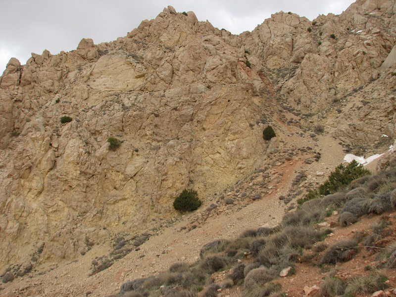 Juniperus shrub = hidingplace of a brown bear