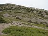habitat of Juniperus sabina