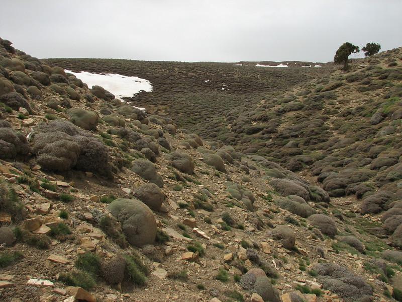 Landscape, habitat of Acantholimon embergeri