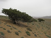 mountain steppe